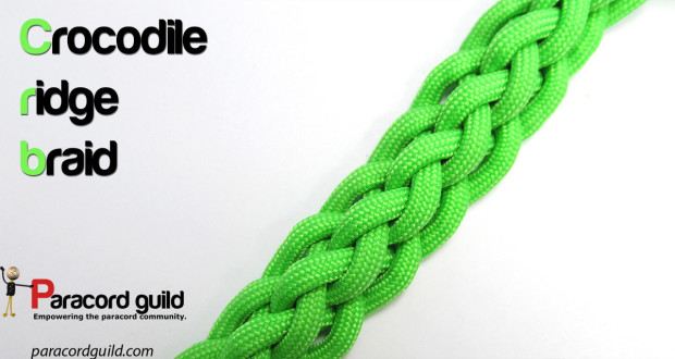 6 strand crocodile ridge braid